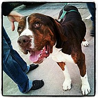 Adopt A Pet :: Louie - Scottsdale, AZ