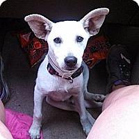 Adopt A Pet :: Biscuit - Jacksboro, TN