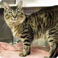Adopt A Pet :: Doc - Arlington, VA