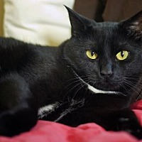 Adopt A Pet :: zz 'Little' courtesy post - Cincinnati, OH