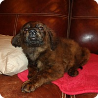 Adopt A Pet :: Stella - Warrenton, NC
