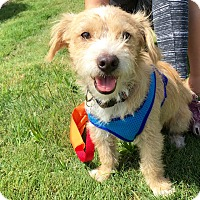 Adopt A Pet :: Carney - Adoption Pending - Gig Harbor, WA