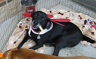 Labrador Retriever Mix Dog for adoption in Acworth, Georgia - Lola