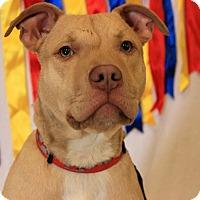 Adopt A Pet :: Tyson - Flushing, MI
