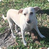 Adopt A Pet :: Carolyn - Boca Raton, FL
