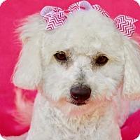 Adopt A Pet :: Leti - Irvine, CA