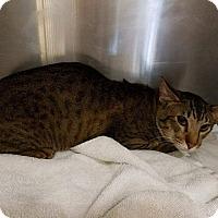 Adopt A Pet :: Joey - Pittstown, NJ