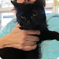 Adopt A Pet :: Blackberry - Riverhead, NY