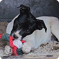 Adopt A Pet :: MISSEY - Humboldt, TN