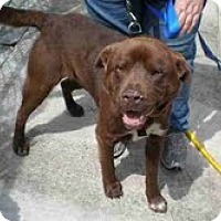 Adopt A Pet :: Bear - Courtesy Post - Dundas, VA