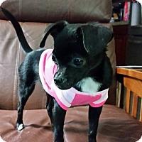 Adopt A Pet :: Jelly Bean - Vacaville, CA