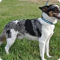 Adopt A Pet :: Sterling - Bedminster, NJ