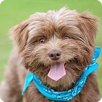 Adopt A Pet :: Baron - Houston, TX