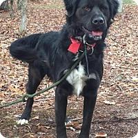 Adopt A Pet :: Titan - Brattleboro, VT