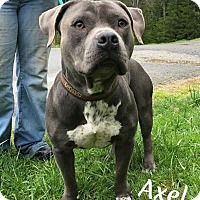 Adopt A Pet :: axel - Fayetteville, WV
