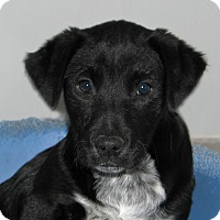 Adopt A Pet :: Mickey - Ruidoso, NM
