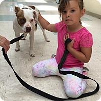 Adopt A Pet :: Weenie - Elyria, OH