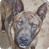 Adopt A Pet :: Ronnie - Oberlin, OH