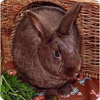 Adopt A Pet :: Count Chocula - Huntsville, AL