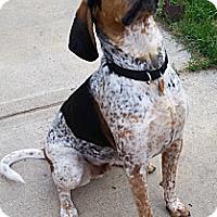 Adopt A Pet :: Brody - Osseo, MN