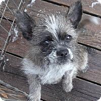 Adopt A Pet :: Liesl ADOPTED! - moscow mills, MO