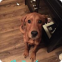 Adopt A Pet :: Ben - Bernardston, MA