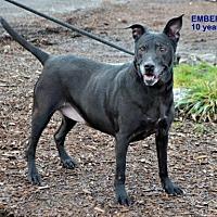 Adopt A Pet :: Ember - Yreka, CA