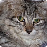 Adopt A Pet :: Chase - Stafford, VA