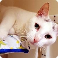 Adopt A Pet :: Steinbeck - Salisbury, MA