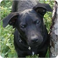 Adopt A Pet :: MURPHY - West Palm Beach, FL