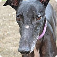 Adopt A Pet :: Scooter (Scooter Wagz) - Chagrin Falls, OH