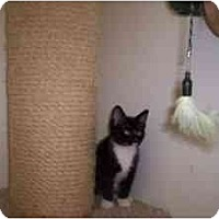 Adopt A Pet :: Oil Pan (OP) - Milwaukee, WI
