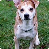 Adopt A Pet :: Rusty - Salem, OR