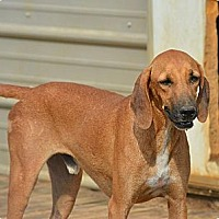 Adopt A Pet :: Randy - Grenada, MS