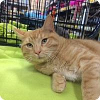 Adopt A Pet :: Collin - Brownsboro, AL