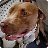Adopt A Pet :: Deezel - Daytona Beach, FL