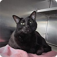 Adopt A Pet :: Eva - Monroe, MI