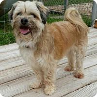 Adopt A Pet :: Sable - Slanesville, WV