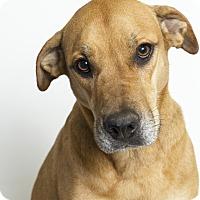 Adopt A Pet :: Vivian - Baton Rouge, LA