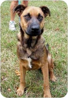 Vizsla/Labrador Retriever Mix Dog for adoption in Peachtree City, Georgia - Paige