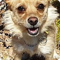 Adopt A Pet :: Rojo - Gilbert, AZ
