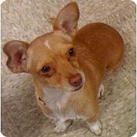 Adopt A Pet :: Joeleen - Fowler, CA