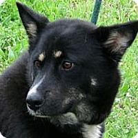 Adopt A Pet :: ALASKA - Glastonbury, CT
