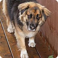 Adopt A Pet :: Stryker - Rigaud, QC