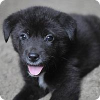 Adopt A Pet :: Brutus - Houston, TX