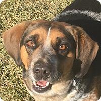 Adopt A Pet :: Boots - Russellville, KY