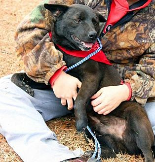 Labrador Retriever Mix Dog for adoption in Claymont, Delaware - Choco