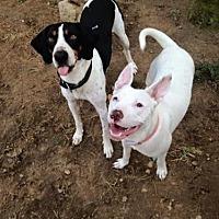 Adopt A Pet :: Flynn - Centerburg, OH