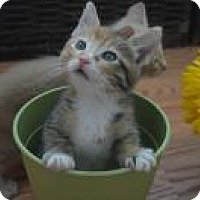 Adopt A Pet :: Foxy - Mission Viejo, CA