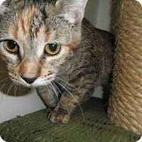 Adopt A Pet :: Colonel - Milwaukee, WI